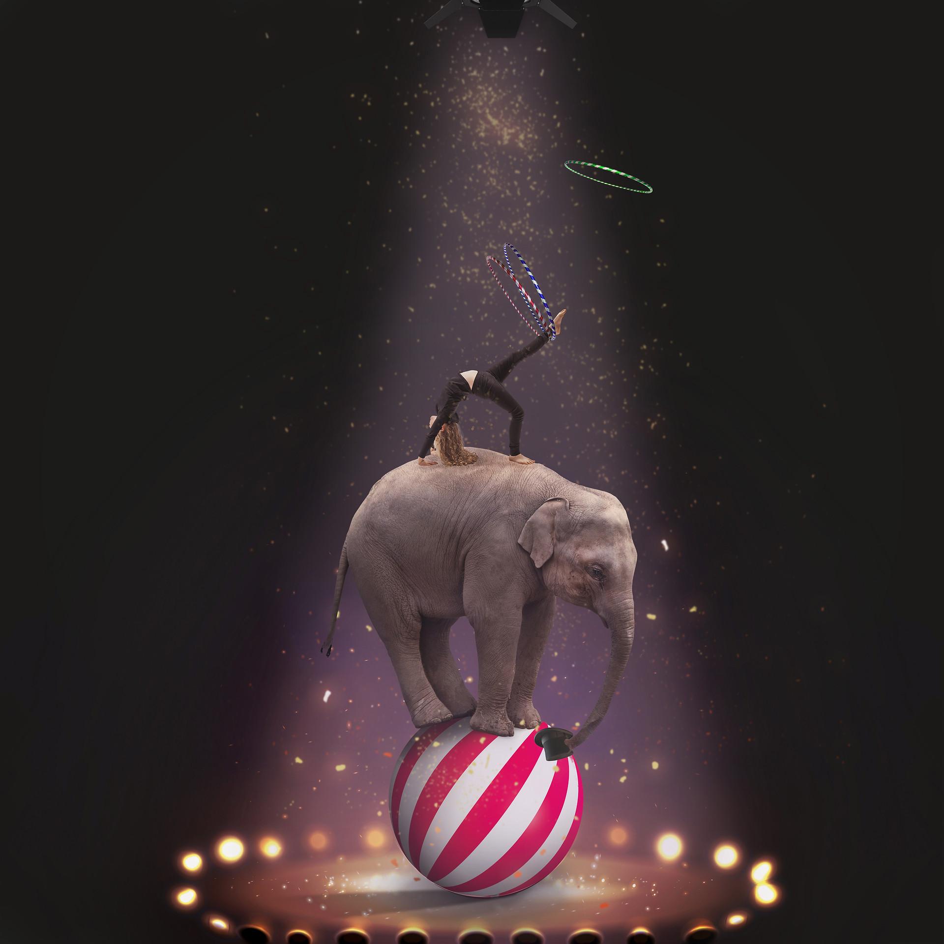 Circus Willow.jpg