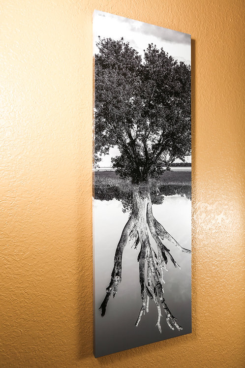 """Double tree - black and white - Canvas 48x16"""""""