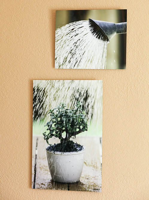 "Double Play - Watering plant - Two metal prints 30x20"" - 20x16"""