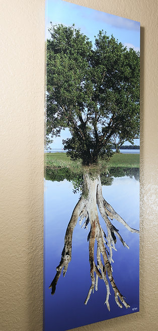Double tree - Colors - Canvas 48x16""