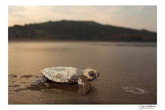 Turtles and the Sand II.jpg