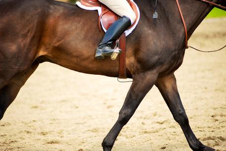 Hunt-Club-Horses-11.jpg