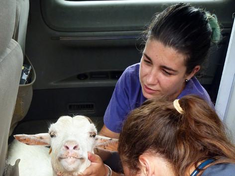 Baillie, Kate and goat.jpg