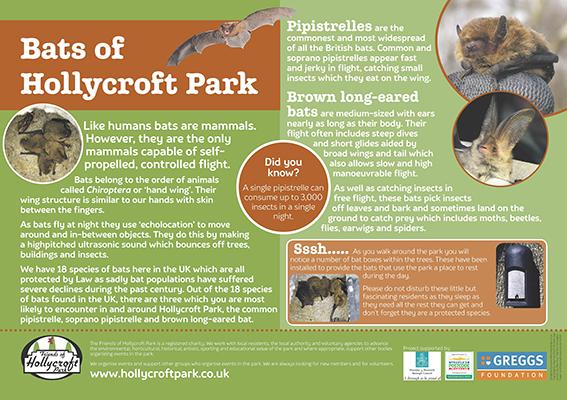 Bats of Hollycroft Park