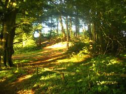 woodland_sunlight