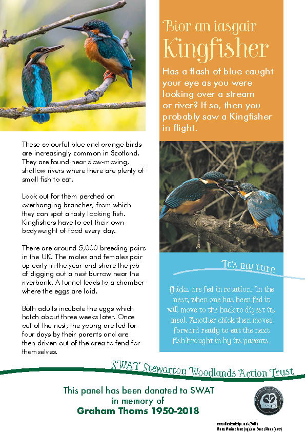 A4 information panel about Kingfishers