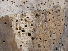 Woodworm treatment Chichester