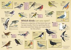 Bird panel