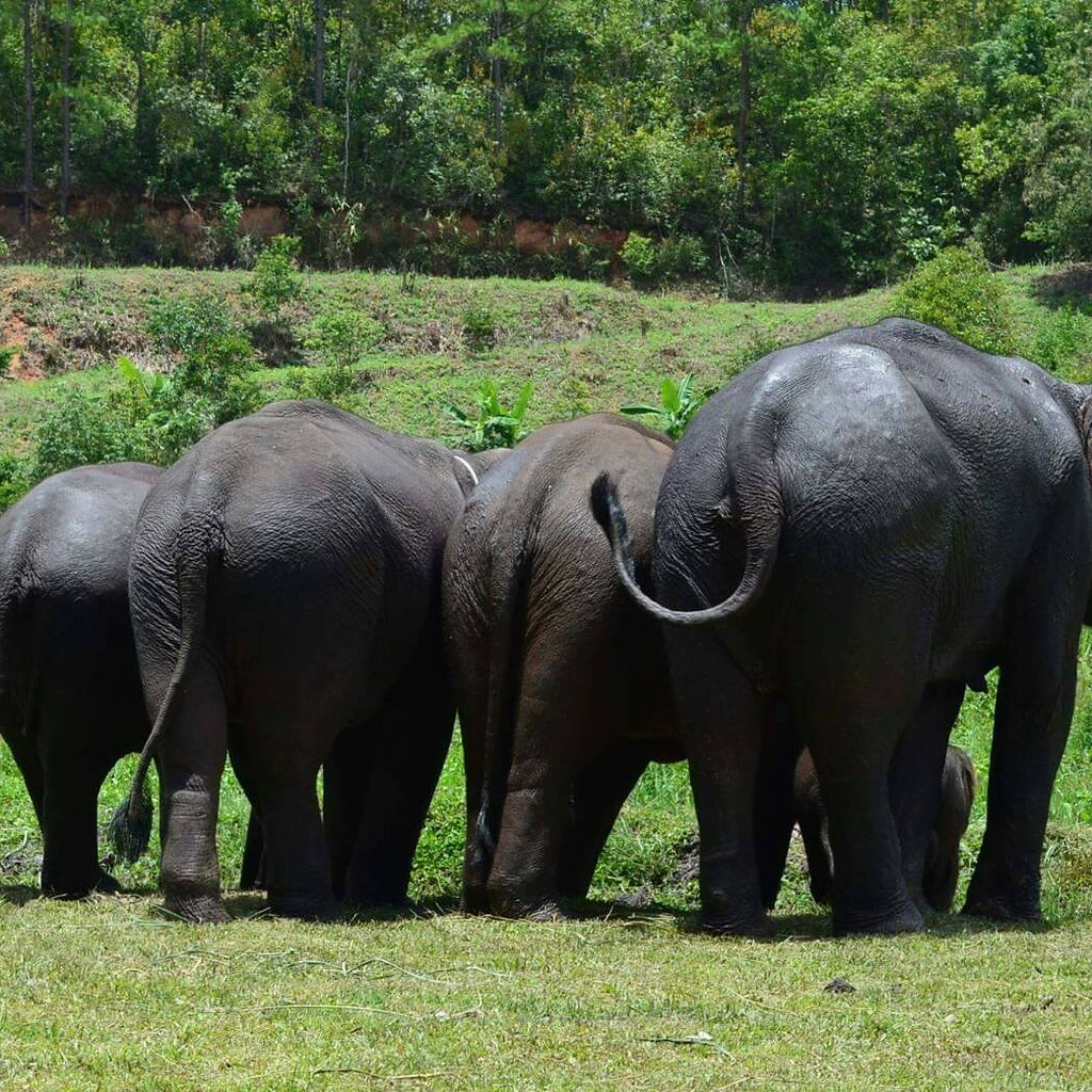 Ethical Elephant Sanctuary | Chiang Mai, Thailand