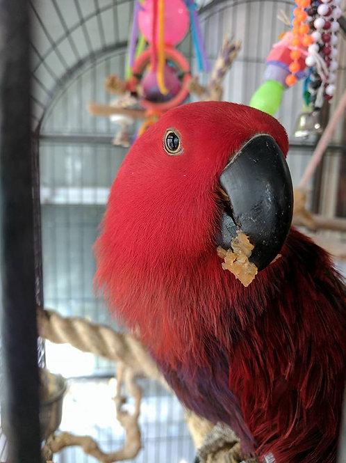 Sponsor a Bird