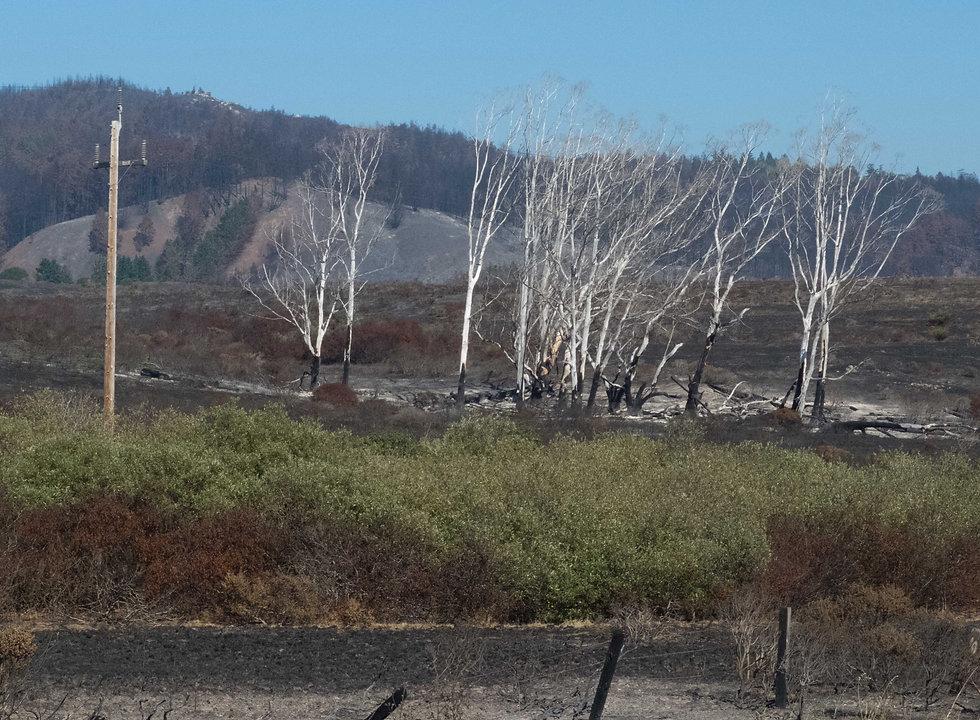 DSCF5581-wht trees.jpg