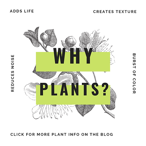 why plants instagram size.png