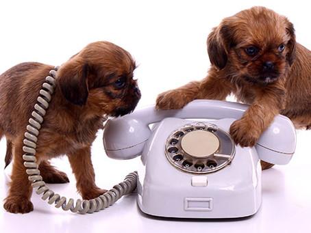 O incrível universo da linguagem canina, aprenda comunicar-se com seu cão.
