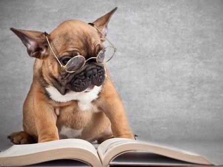 Cães podem ajudar criança a aprender