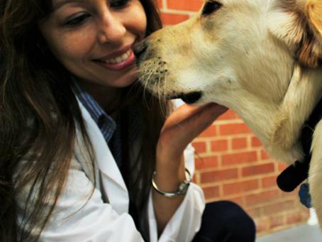 A Ciência sobre o Luto em Cães Domésticos