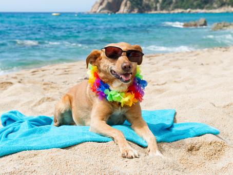 Vai pra praia? Previna o verme do coração