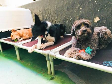 Holanda torna-se o primeiro país sem cachorros de rua