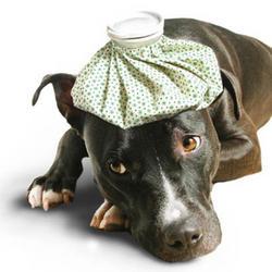 Os cuidados com a Gripe Canina