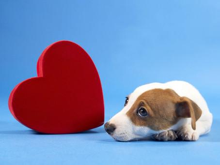 Como saber se seu cão está deprimido e o que fazer