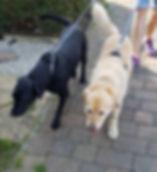 dog walker in ashford kent