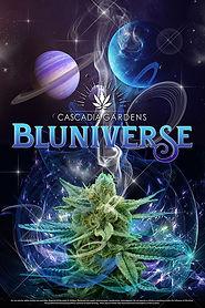 Bluniverse-Web.jpg