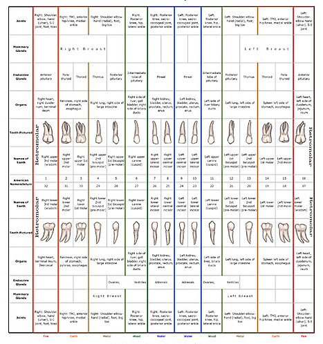 Dental Chart Package