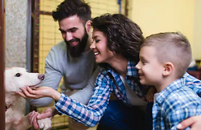 family members playing with white dog