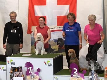 Bericht von der Pudelmania bzw. Pudelschweizermeisterschaft in Münsingen am 13. Oktober 2019
