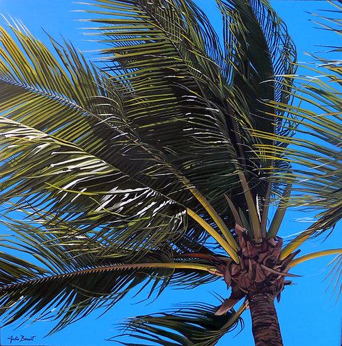 Palmier Dominicain