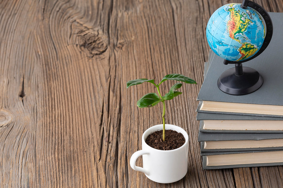 arrangement-with-books-potted-plant.jpg