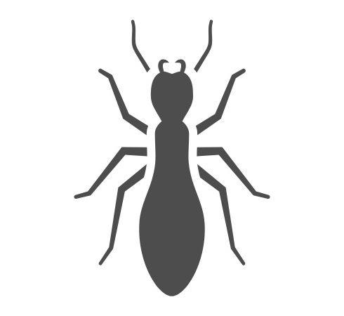 termite2.jpg