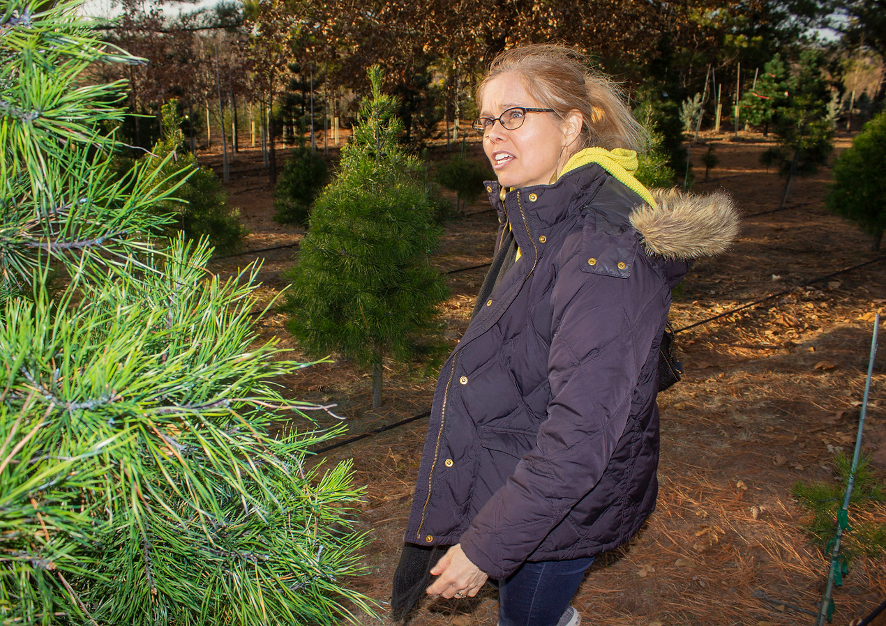 Mom At Tree Farm (2019)