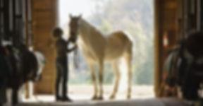 Horse%20Stall%20Portrait_edited.jpg