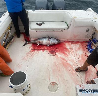 tuna fishing montauk.jpg
