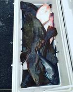 Block Island Charter Fishing | Trophy Fluke | Keepin' It Real Sportfishing | Sea Bass