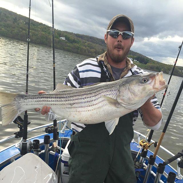 Chazz with a small male #striper #stripedbass #stripers247 _striperfishingdaily _the_striper_coast _