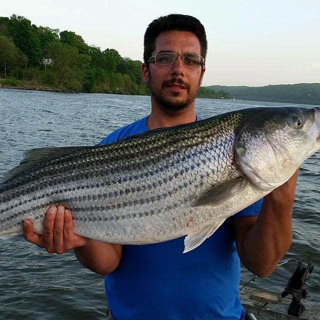 Putting fish on deck tonight on #muddyrudder #stripedbass #striperking #stripers247 #whatgetsyououtd