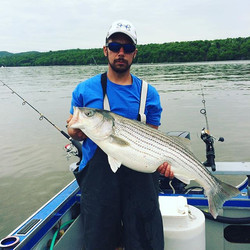 #stripedbass #stripers247 #fishon #fishgloomis #hudsonriver 38_ 23lb female with eggs still