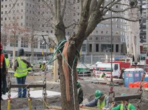 911tree-2011-01-05_z.jpg