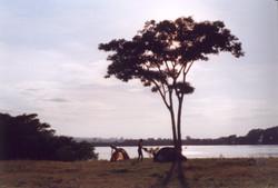 acampamento final de ano846