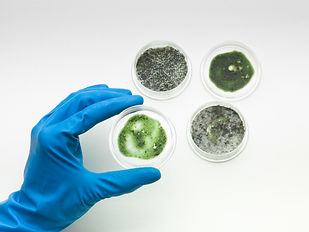 specimens-of-mold-with-hand-holding-one-