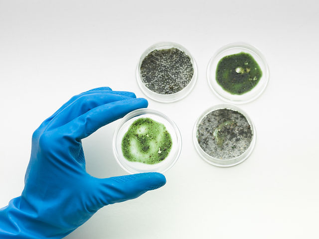 specimens-of-mold-with-hand-holding-one-PX4C2RH.jpg