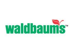 waldbaums.jpg