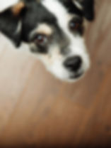 dog-926725_1920.jpg