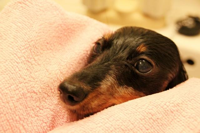 介護犬も安心
