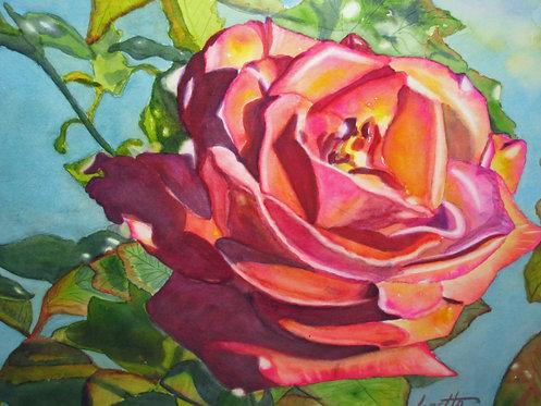 First Summer Rose