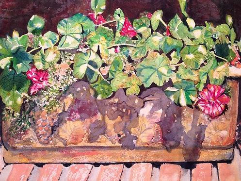 Rooftop Geraniums