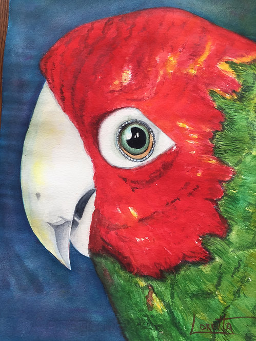 """Parrot of Telegraph Hill 11""""x14"""""""