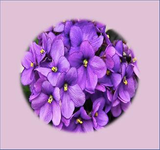 african_violet_Leslie-.jpg