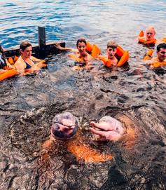 Mergulho com Botos Rosa.jpg